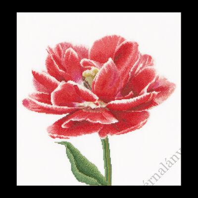 Piros fehér szélű tulipán - keresztszemes készlet