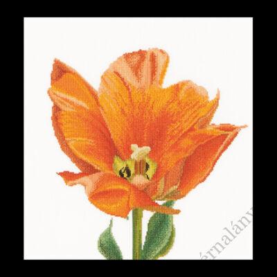 Narancssárga triumph tulipán - keresztszemes készlet