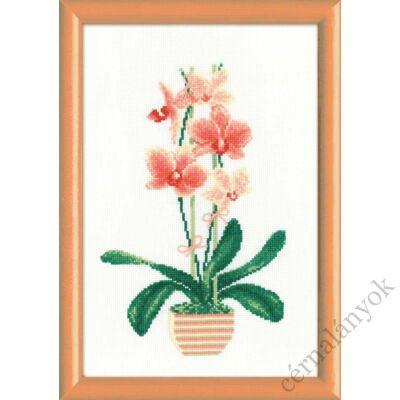 Sárga orchidea