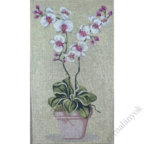 Orchidea fehér