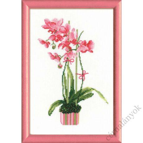 Rózsaszín orchidea