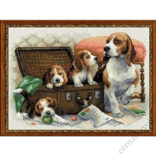 Kutya család