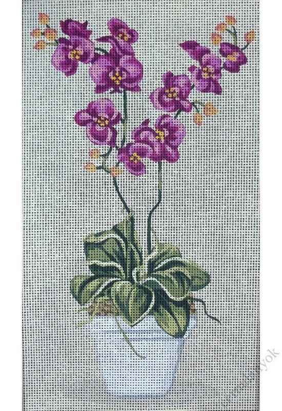 Orchidea lila