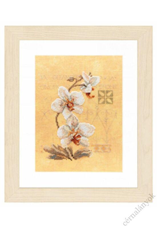 Orchideák keresztszemes készlet